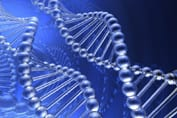 Models of DNA helices. Ref: www.dreamstime.com