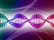 An image of a DNA double helix, in dark pink and dark purple, on a multi-coloured background. Ref: www.dreamstime.com