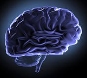 A picture of a brain (right-side view) in purple on a black background