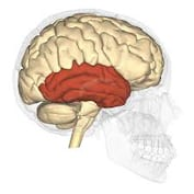 how to help someone with temporal lobe seizures